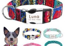 5 Best Dog Collars for Australian Cattle Dogs (Reviews Updated 2021)