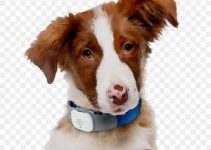 Best Dog Collar For Australian Shepherds Reviews