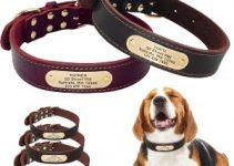 4 Best Dog Collars for Beagles (Reviews Updated 2021)