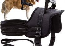 Best Dog Harness For Australian Cattle Dogs Reviews