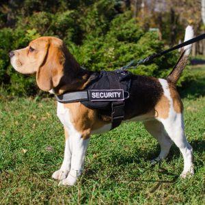 5 Best Dog Harnesses For Beagles