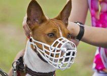 Best Dog Muzzle For Australian Shepherds Reviews