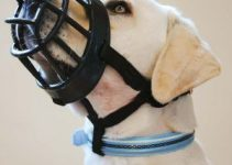5 Best Dog Muzzles for Goldendoodles (Reviews Updated 2021)