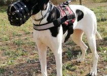 5 Best Dog Muzzles for Great Danes (Reviews Updated 2021)