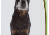 5 Best Dog Shampoos for Australian Cattle Dogs (Reviews Updated 2021)