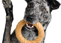 5 Best Dog Toys for Australian Cattle Dogs (Reviews Updated 2021)