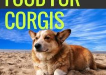 Foods For Corgis
