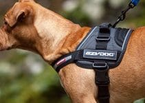 5 Best Harnesses for Boxers (Reviews Updated 2021)