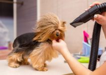 5 Best High Velocity Dog Dryers (Reviews Updated 2021)