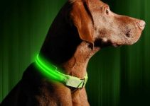 5 Best Dog Collar for Boxers (Reviews Updated 2021)