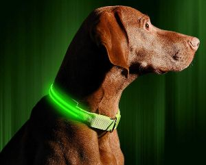 Illumiseen Led Dog Collar Usb Rechargeable Available In 6 Colors & 6 Sizes Makes Your Dog Visible, Safe & Seen