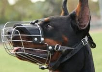 5 Best Dog Muzzles For Doberman Pinschers (Reviews Updated 2021)