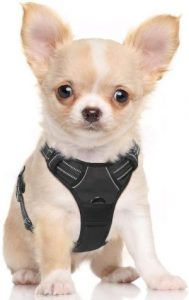 Rabbitgoo Dog Harness No Pull Pet Harness Adjustable Outdoor Pet Vest 3m Reflective Oxford Material Vest For Dogs Easy Control For Small Medium Large Dogs (1)