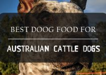 Australian Cattle Dog Food