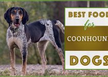 Best Coonhound Dog Food