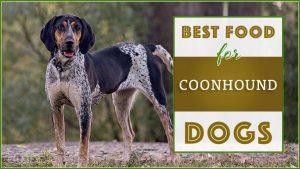 Best Coonhound Dog Food