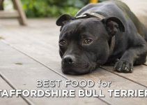 5 Best Dog Foods for American Staffordshire Terriers (Reviews Updated 2021)