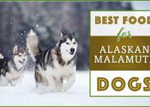 Best Malamute Dog Food