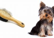 5 Best Dog Brushes for Yorkshire Terriers (Reviews Updated 2021)