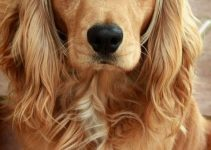 5 Best Dog Crates For Cocker Spaniels