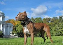 5 Best Dog Crates for Pitbulls (Reviews Updated 2021)