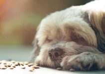 5 Best Dog Crates For Shih Tzus