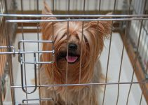 5 Best Dog Crates for Yorkshire Terriers (Reviews Updated 2021)