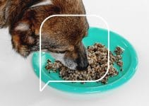 5 Best Dog Foods With Herring