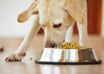 5 Best Dog Foods With Lamb