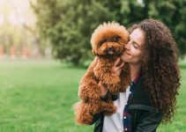 5 Best Dog Toys For Poodles