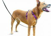Best Dog Collars For Belgian Sheepdog