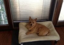 5 Best Dog Bed for Cairn Terriers (Reviews Updated 2021)