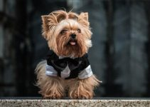 Best Dog Coats For Small Dogs