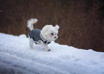 Best Dog Coats With Legss