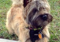 Best Dog Collar For Cairn Terriers