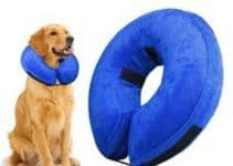 5 Best Dog Cones (Reviews Updated 2021)
