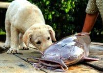 Best Dog Food With Catfish