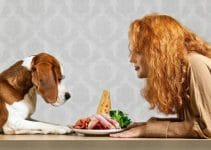 5 Best Dog Foods with Cod (Reviews Updated 2021)