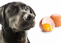 5 Best Dog Foods with Egg (Reviews Updated 2021)