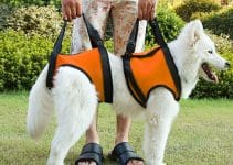 Best Dog Lift Harnesses
