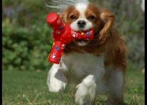 5 Best Dog Toys for Cavalier King Charles Spaniels (Reviews Updated 2021)