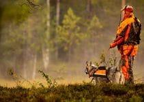 Best Dog Vests For Hunting
