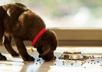 Best Food For Diabetic Dogs