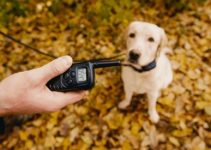 5 Best Vibrating Dog Collars (Reviews Updated 2021)