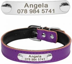 Didog Cute Leather Padded Custom Dog Collar With Engraved Nameplate Id Tag,fit Cats And Small Mediu
