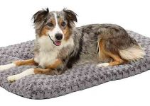 5 Best Dog Beds for Border Collies (Reviews Updated 2021)