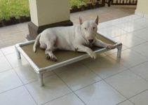 Dog Bed For Bull Terriers