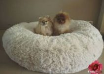 5 Best Dog Beds for Pomeranians (Reviews Updated 2021)