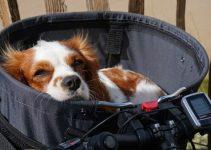 5 Best Dog Bike Baskets (Reviews Updated 2021)