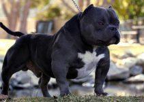 Dog Brush For Pitbulls